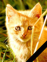 RIP, kitten…