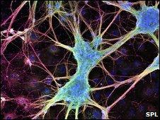 Рост нейронов