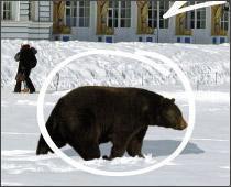 У нас нет медведей на улицах!