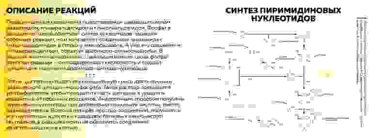 Рисунок 3. Источник: собственная иллюстрация на основе материала книги Михаила Никитина «От туманности до клетки»
