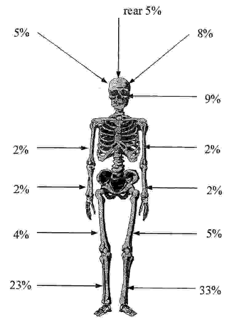 Иллюстрации скелетов с процентами приводятся по диссертации Мацке [5]