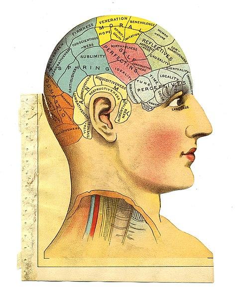 Френология – псевдонука. Тем не менее, не стоит к ней относиться совсем уж презрительно. Нейрология берет свои истоки именно там и до сих пор включает в себя идеи френологического толка. (Wikimedia Commons)