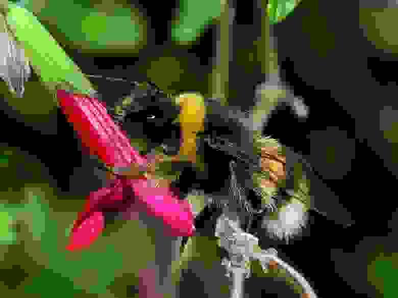 Влияние дофамина на пчёл делает их счастливыми. Нервные центры отвечающие за разные эмоции сходны [2]