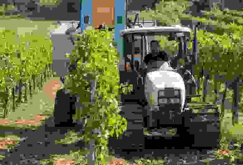 Использование уборочных машин среди виноделов в центральных регионах Италии в этом году выросло на 20 %. Фото: The Wall Street Journal