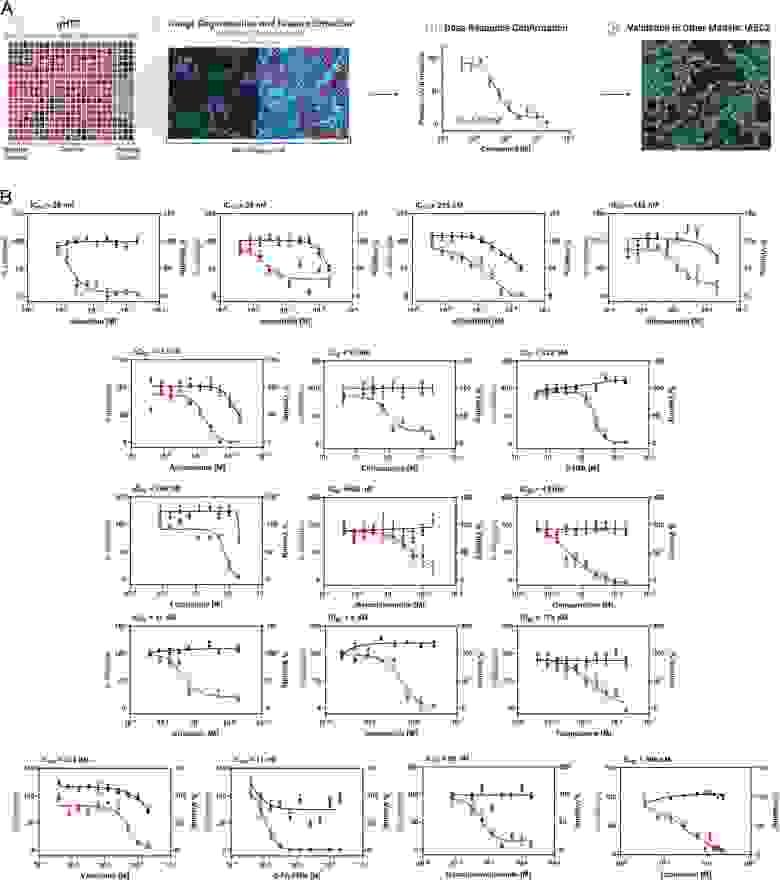 Скрининг для выявления препаратов с противовирусной активностью против SARS-CoV-2