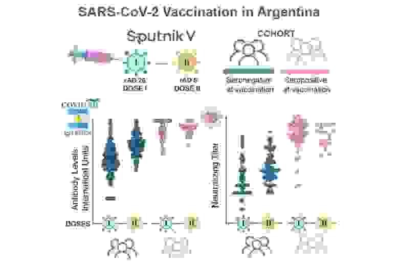 Схематическое изображение двухкомпонентной вакцины (вверху) и уровни антител IgG у вакцинированных ранее не болевших (внизу, синий цвет) и инфицированных (красный)