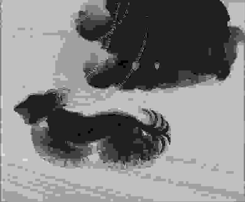 «Динамизм собаки на поводке». Джáкомо Ба́лла, 1912