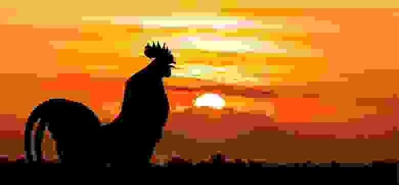 Петух на фоне восстающего солнца, фотография