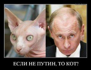 Если не Путин, то кот?