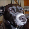 Собака-подозревака :)