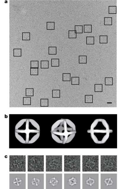 Октаэдр был сделан из одноцепочечной молекулы ДНК длиной примерно 1700 нуклеотидов, имеющей комплементарные области и...