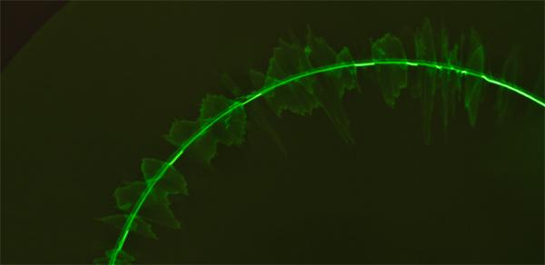 Визуализация звука без компьютера