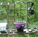 Как с помощь Raspberry PI вырастить фасоль, и снять TimeLapse видео