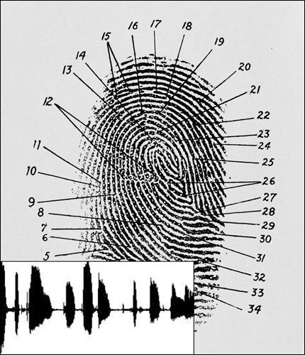 Голосовые отпечатки: скорее всего, вы уже успели «наследить»