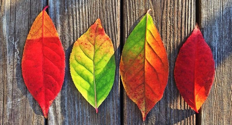 Сетевой сентябрь и серверный октябрь: ждем вас на вебинарах HPE