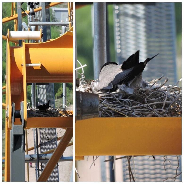 Птицы на стройплощадке Лахта Центра