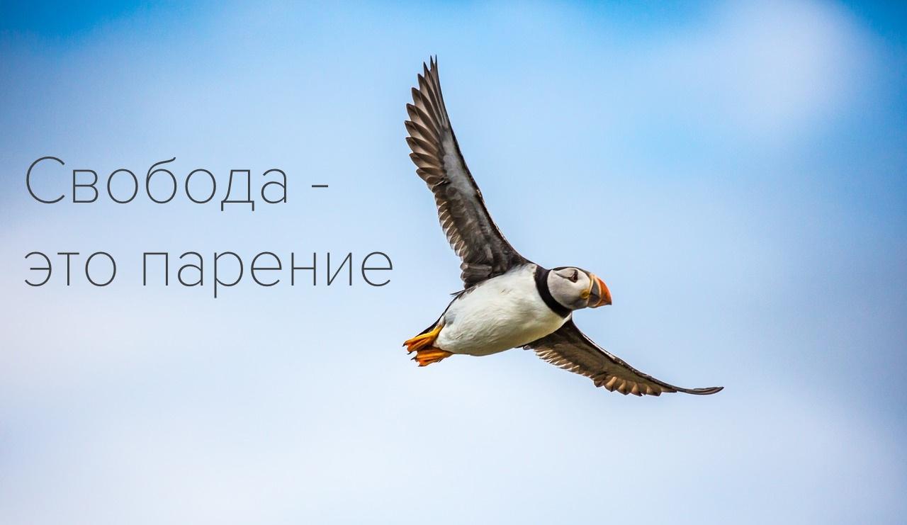 Законы и проекты, которые изменят лицо российского IT. Часть II