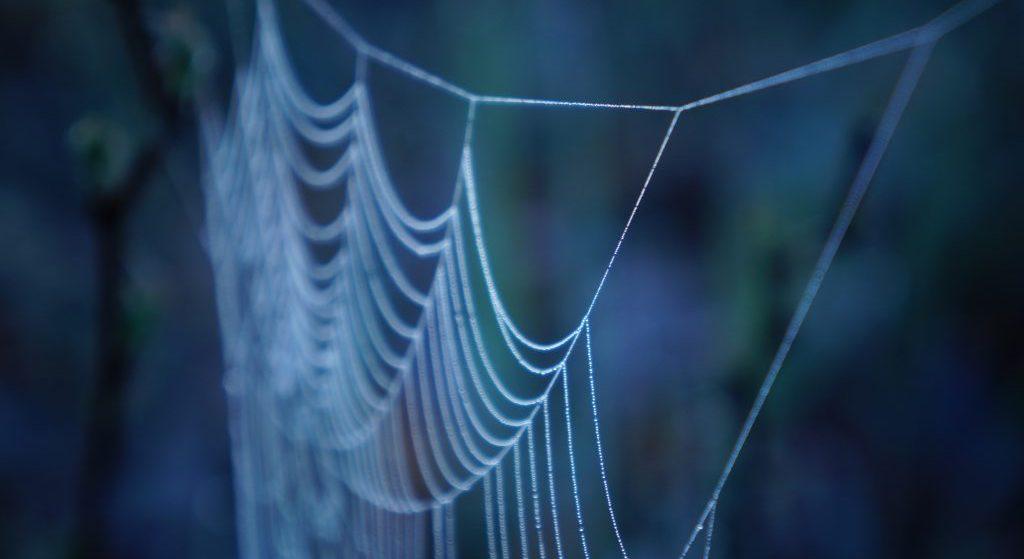 Паучий шелк из фототрофных бактерий