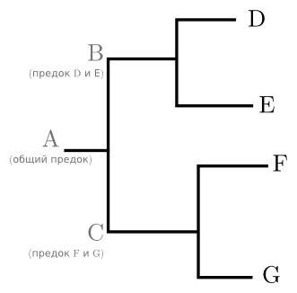 Простейшее дерево четырёх генов