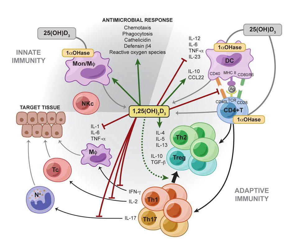 Витамин D - источник, недостаток, действие