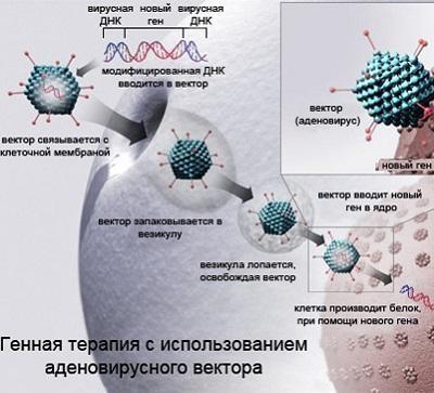 Генная терапия старения vs фармакология