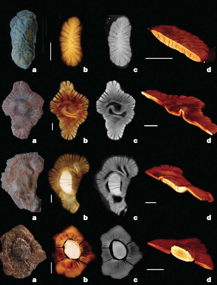 Франсвильская биота первые многоклеточные организмы