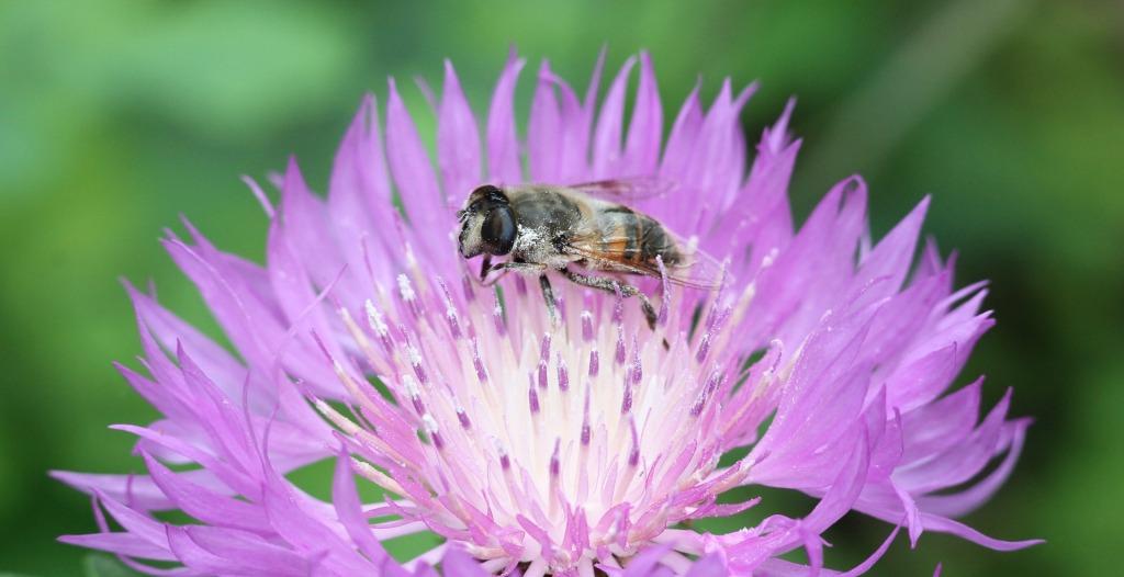Цветы, муха и хорошо отрепетированное случайное машинное обучение