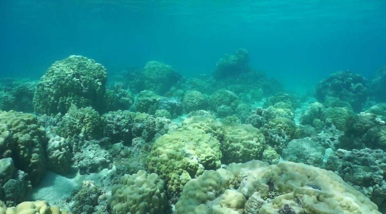 [Перевод] Коралловые рифы хранят секреты прошлого и будущего океанов