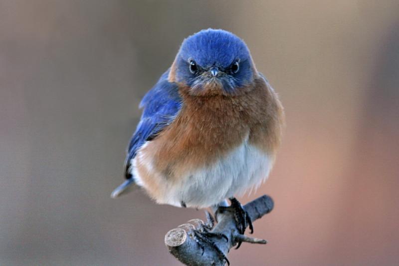 Bluebird: magic inside