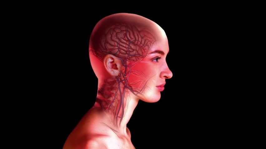 «Невидимые» мухи: новый метод изучения нервной системы посредством депигментации тканей