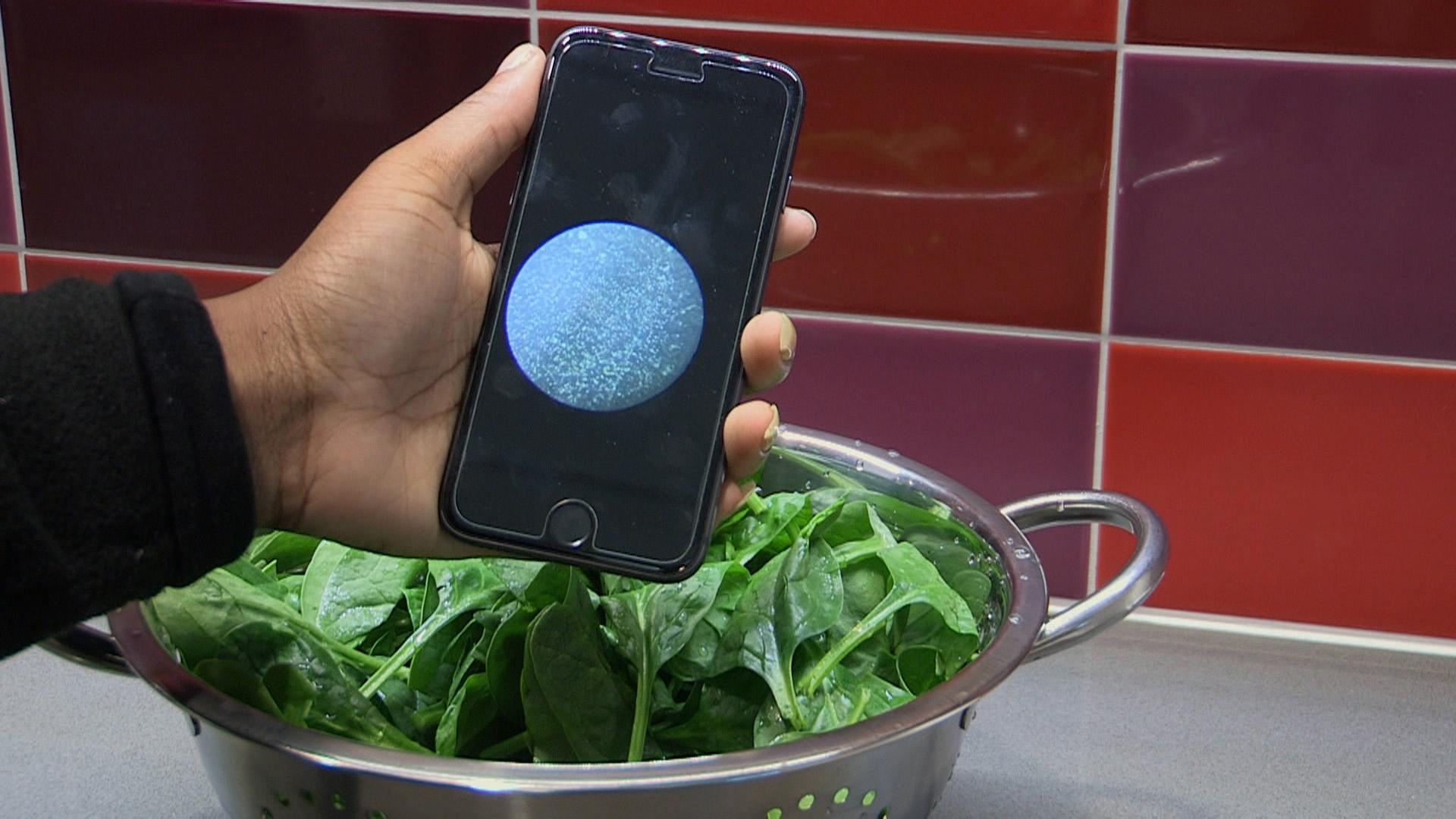 Учёные создают дешёвое устройство для определения бактерий в еде