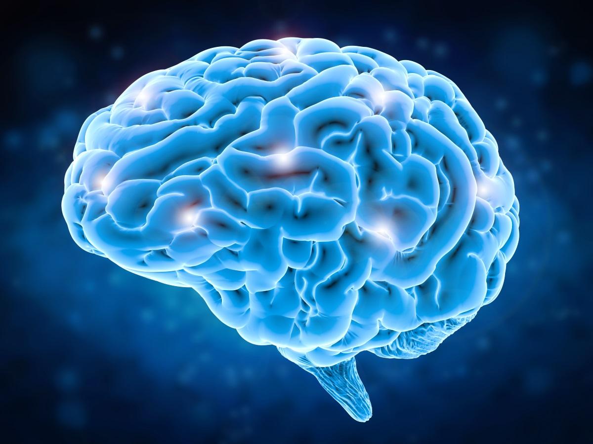 Лекции о мозге, часть 1. Эволюция головного мозга человека. Функции мозга на каждом этапе его развития