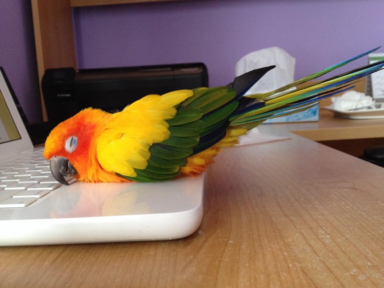 Картинки для, попугаи прикольные открытки