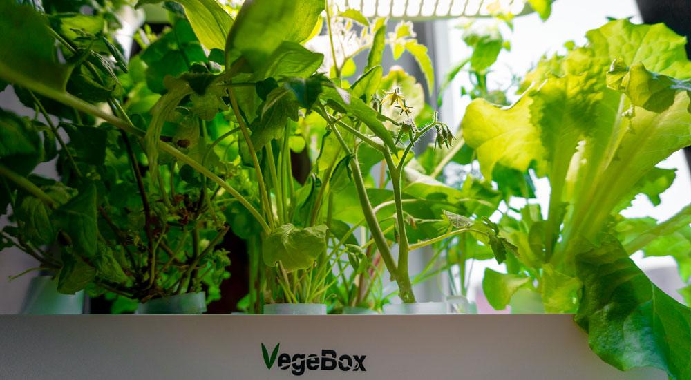 Как начать жить и выращивать салат