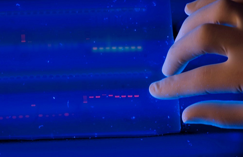 """""""Mass product"""": the first commercial DNA storage will be presented in 2019"""