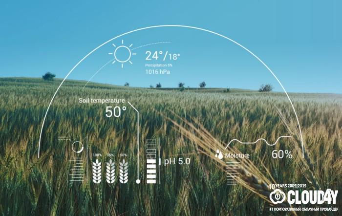 Роботы и клубничка: как AI повышает урожайность полей