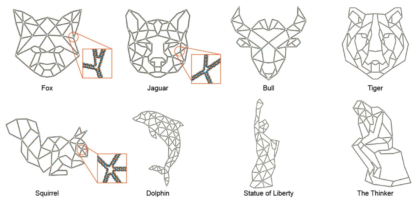 PERDIX: алгоритм автоматического проектирования ДНК-оригами разной геометрии