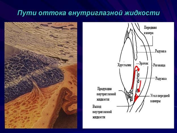 Циркуляция внутриглазной жидкости