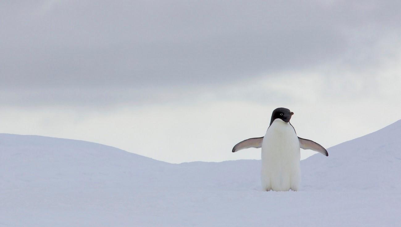 Вышел Linux 4.20 — что изменилось в новой версии ядра