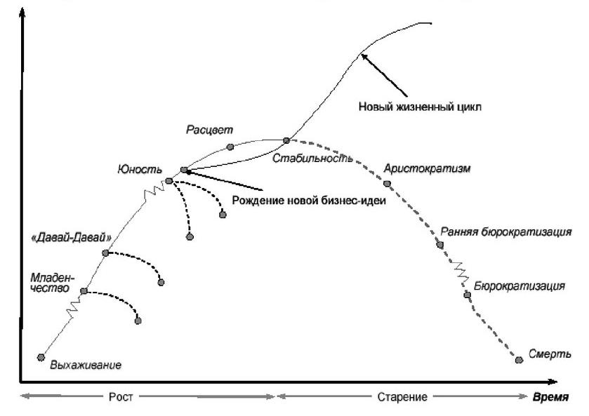 Цикл Адизеса