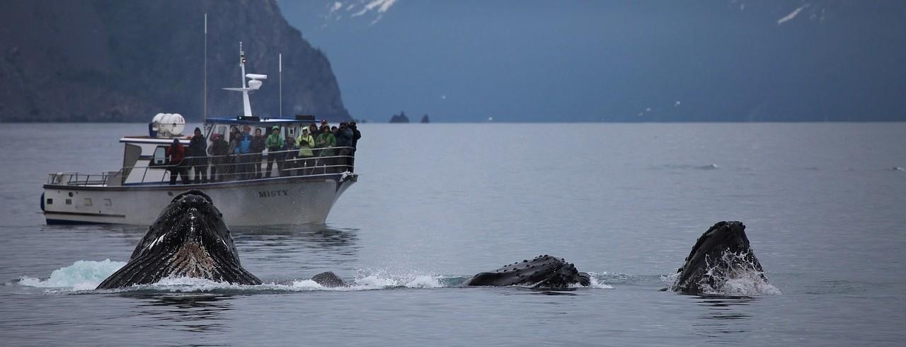 Краш-курс на Docker: научитесь плавать с большой рыбой