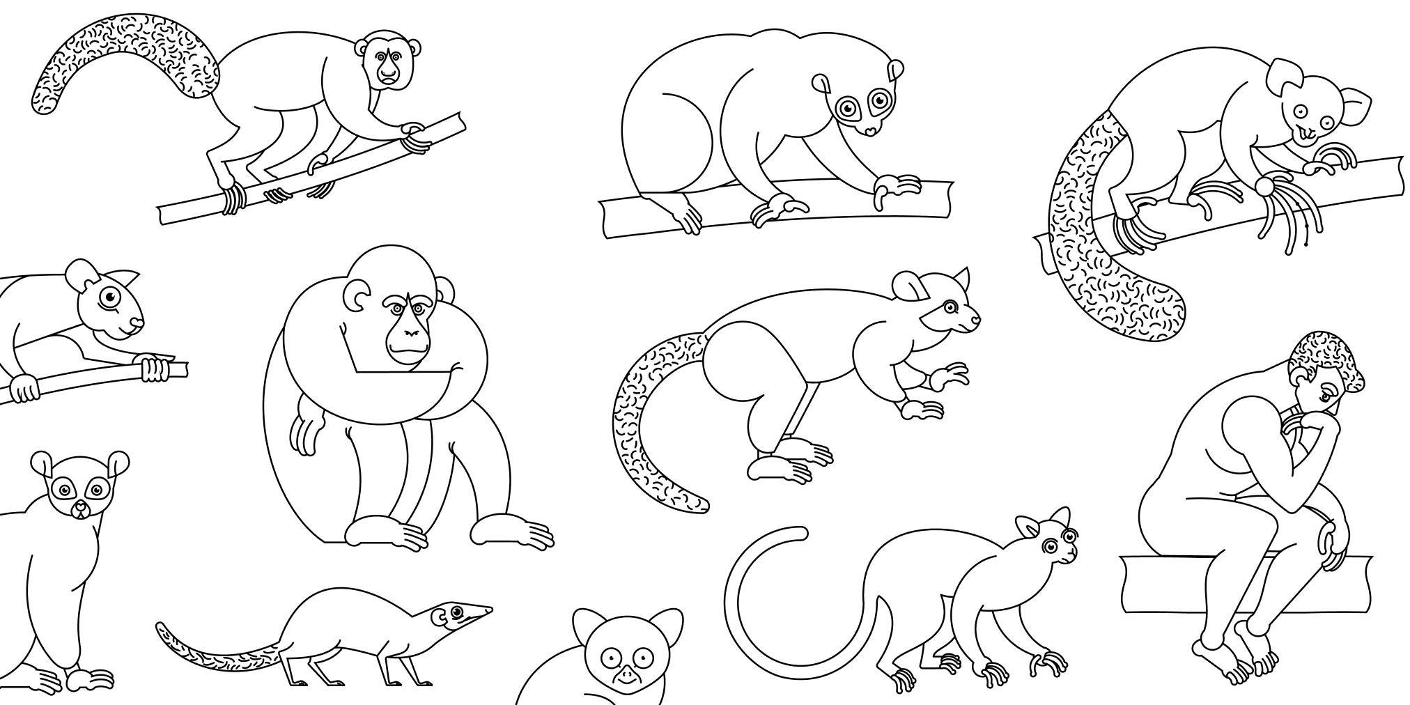 Primate tree visualization
