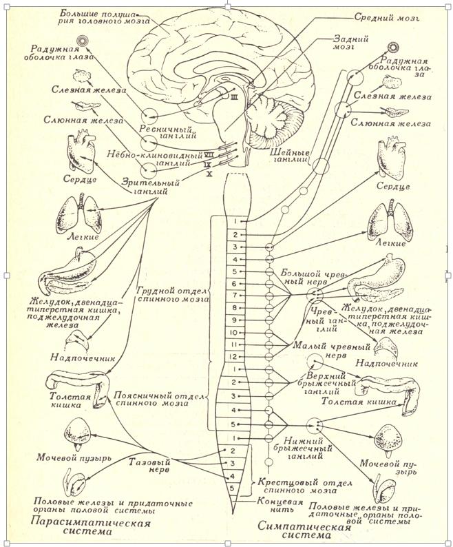 Теории и модели работы мозга группа в телеграмме для девушек работа