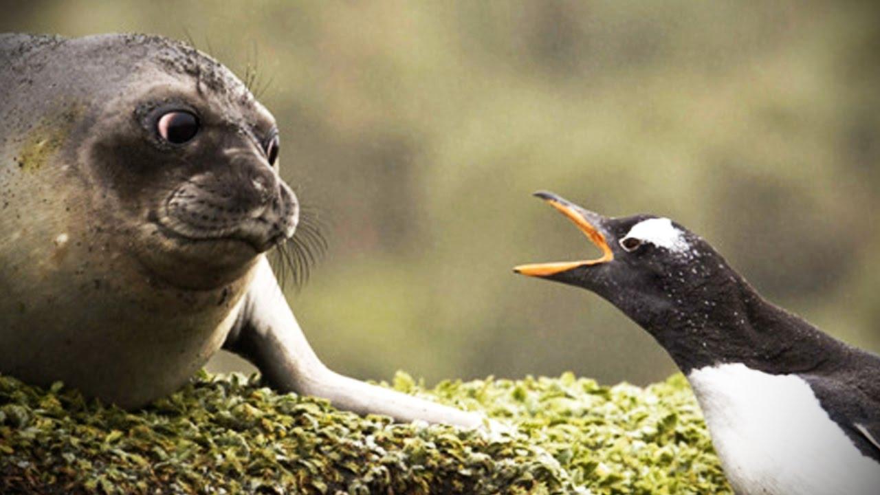 Му-му, гав-гав, кря-кря: эволюция акустической коммуникации