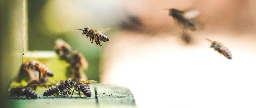 Медовая арифметика: сложение и вычитание в исполнении пчел