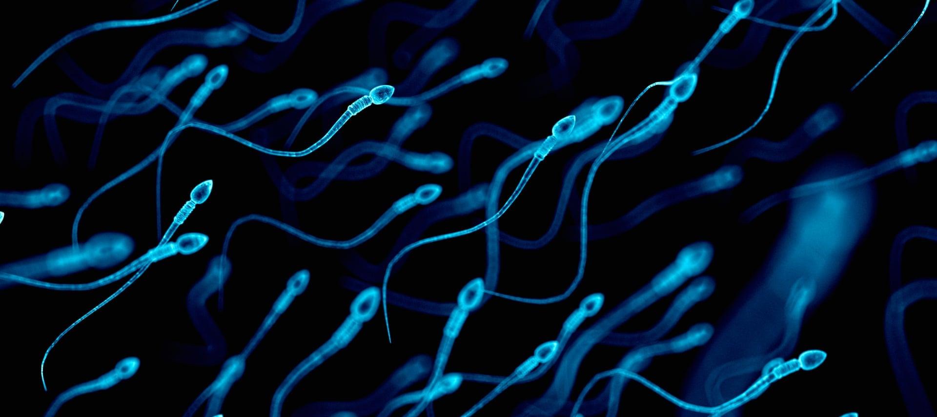 Движение это жизнь кинематика сперматозоидов