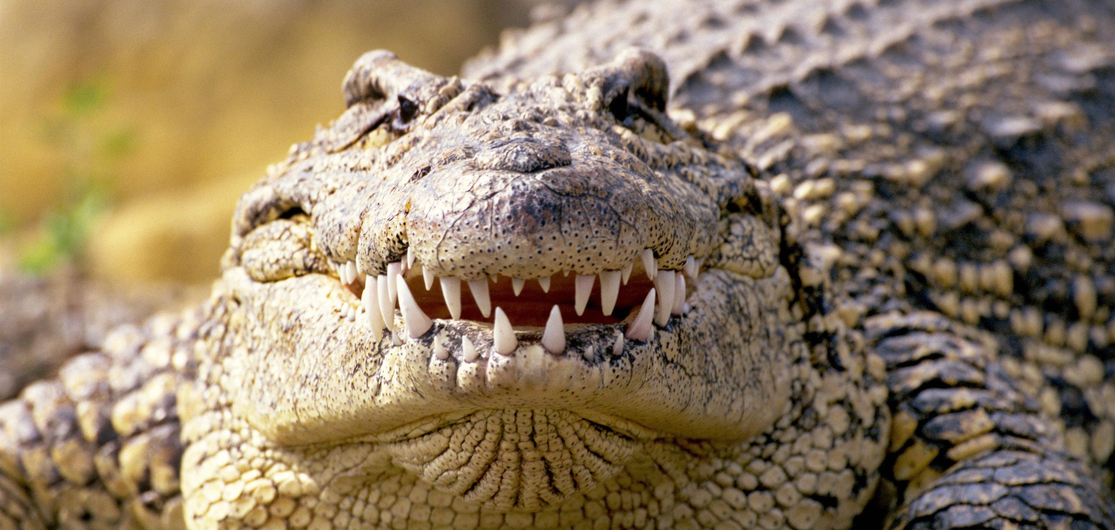 Зубная фея тут не работает: структура эмали зубов крокодилов и их доисторических предков