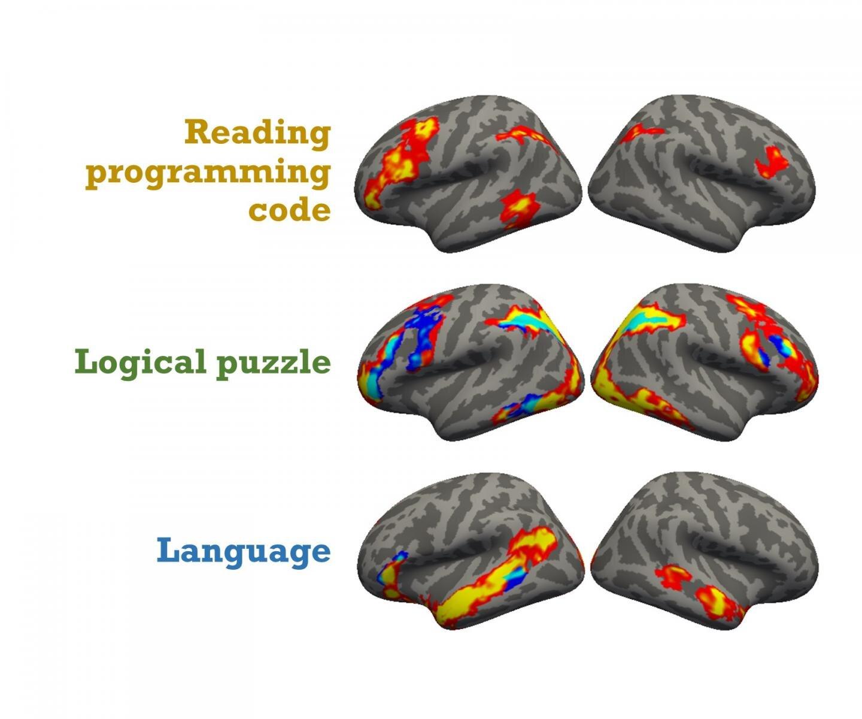 Перевод Вот ваш мозг на Питоне исследователи расшифровали нейро-механику программирования