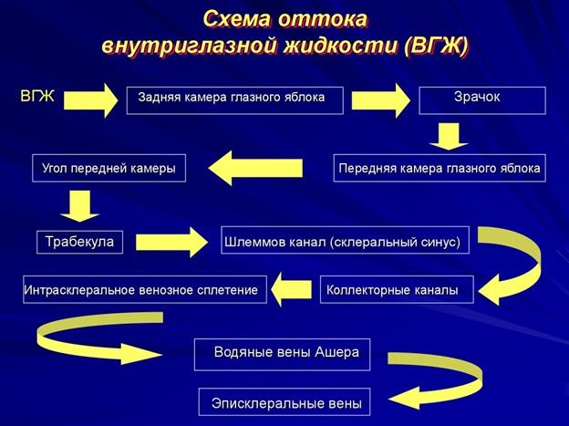 Схема оттока внутриглазной жидкости
