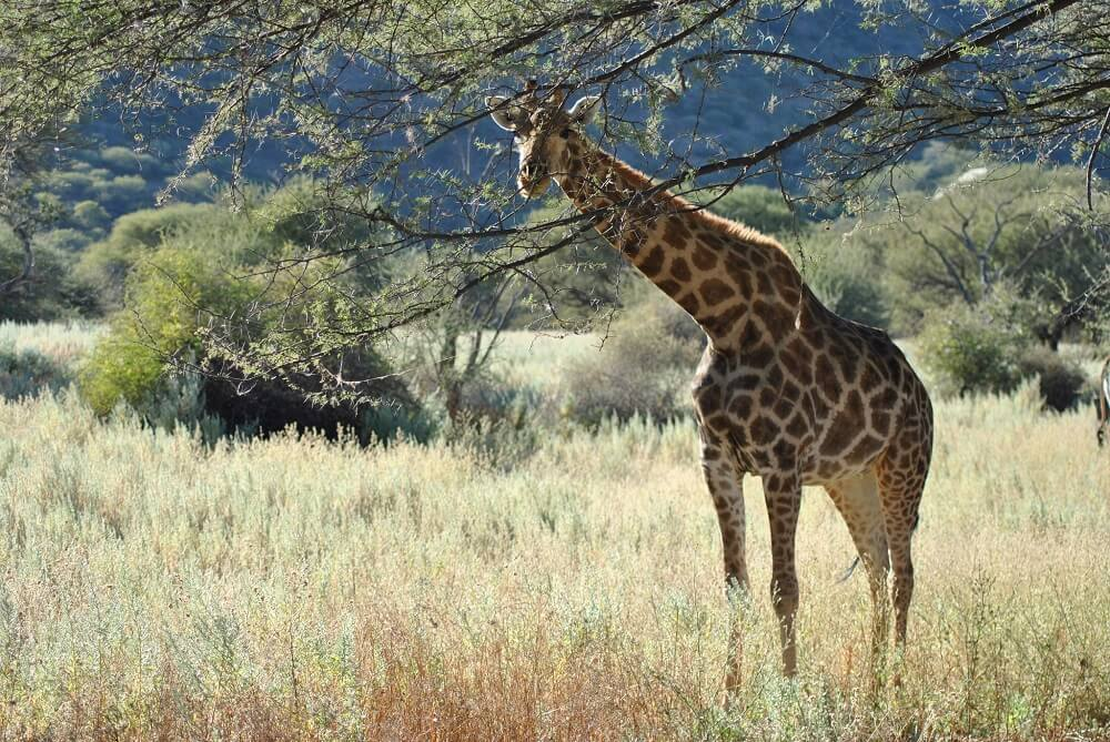 From the buzz of giraffes to the sounds of birds-imitators - we listen to nature together